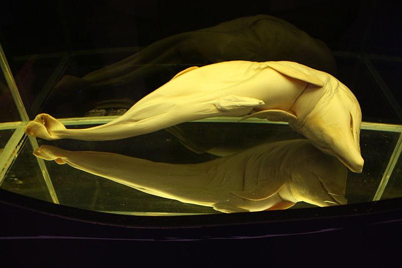 Photo credit: M0tty, taken at Musée d'histoire naturelle de Bruxelles