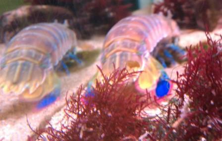 Cabrillo Marine Aquarium. Cabrillo Marine Aquarium