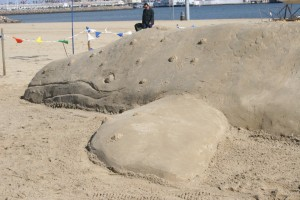 Life-size gray whale made out of sand