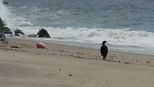 Cormorant and balloon